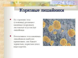 Корковые лишайники По строению тела (слоевища) различают накипные (коpковые), ли