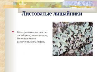 Листоватые лишайники Более pазвиты листоватые лишайники, имеющие вид более или м