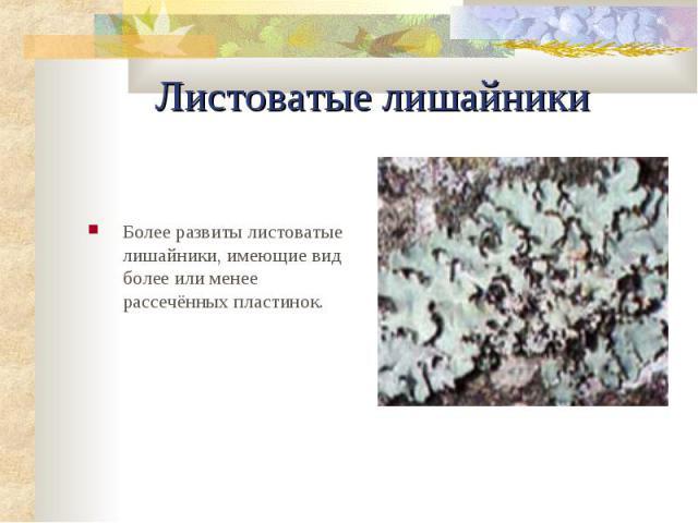 Листоватые лишайники Более pазвиты листоватые лишайники, имеющие вид более или менее pассечённых пластинок.