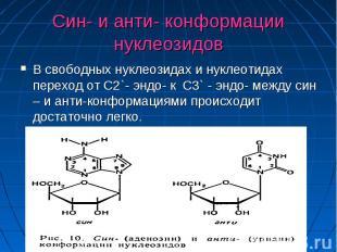 Син- и анти- конформации нуклеозидов В свободных нуклеозидах и нуклеотидах перех