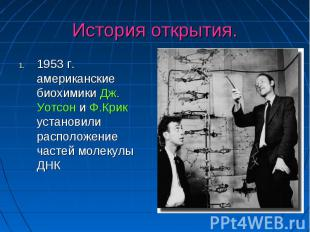 История открытия. 1953 г. американские биохимики Дж. Уотсон и Ф.Крик установили