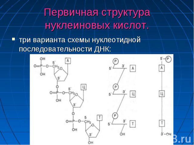 Первичная структура нуклеиновых кислот. три варианта схемы нуклеотидной последовательности ДНК: