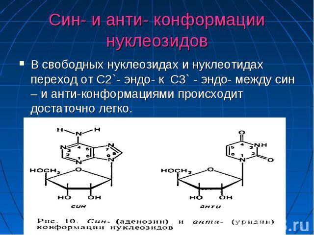 Син- и анти- конформации нуклеозидов В свободных нуклеозидах и нуклеотидах переход от C2`- эндо- к C3` - эндо- между син – и анти-конформациями происходит достаточно легко.