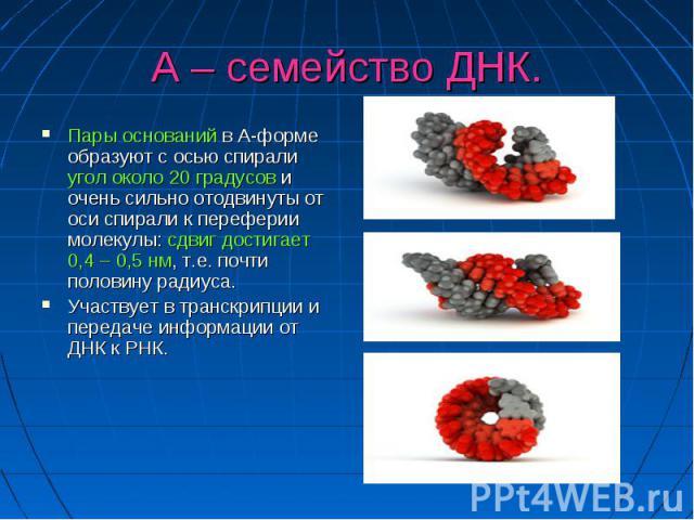 А – семейство ДНК. Пары оснований в А-форме образуют с осью спирали угол около 20 градусов и очень сильно отодвинуты от оси спирали к переферии молекулы: сдвиг достигает 0,4 – 0,5 нм, т.е. почти половину радиуса. Участвует в транскрипции и передаче …