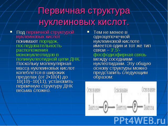 Первичная структура нуклеиновых кислот. Под первичной структурой нуклеиновых кислот понимают порядок, последовательность расположения мононуклеотидов в полинуклеотидной цепи ДНК. Поскольку молекулярная масса нуклеиновых кислот колеблется в широких п…