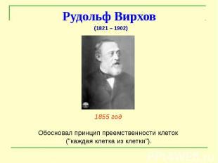 """Рудольф Вирхов 1855 год Обосновал принцип преемственности клеток (""""каждая к"""