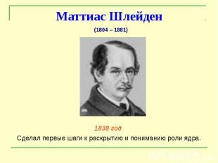 Маттиас Шлейден 1838 год Сделал первые шаги к раскрытию и пониманию роли ядра.