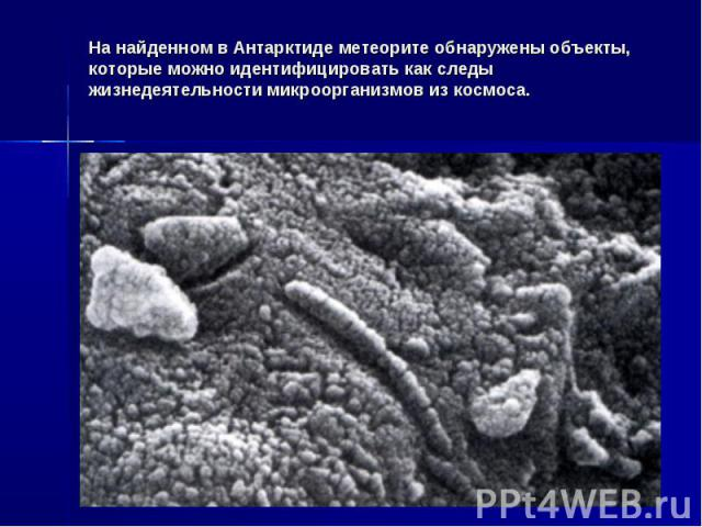 На найденном в Антарктиде метеорите обнаружены объекты, которые можно идентифицировать как следы жизнедеятельности микроорганизмов из космоса.