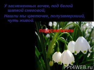 подснежник У заснеженных кочек, под белой шапкой снеговой, Нашли мы цветочек, по