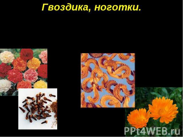 Гвоздика, ноготки. Семена гвоздики напоминают маленькие гвоздики, а семена ноготков — птичьи ноготки.
