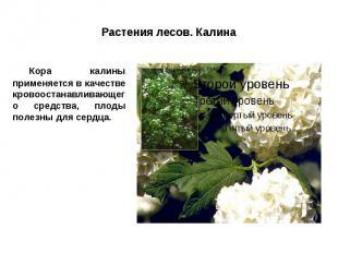 Растения лесов. Калина Кора калины применяется в качестве кровоостанавливающего