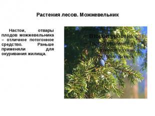 Растения лесов. Можжевельник Настои, отвары плодов можжевельника – отличное пото