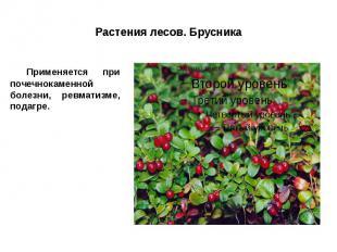 Растения лесов. Брусника Применяется при почечнокаменной болезни, ревматизме, по