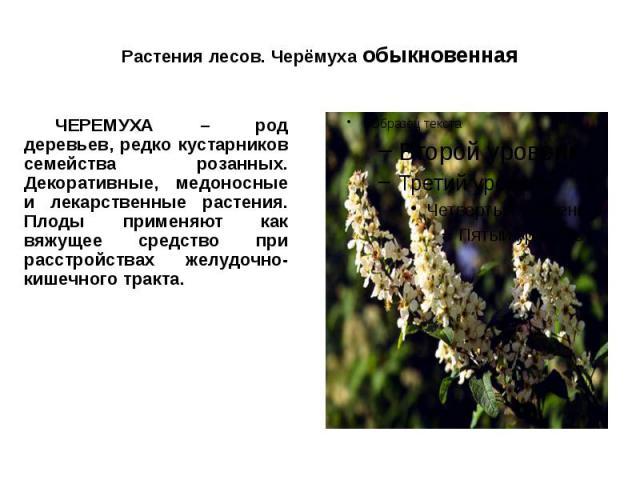 Растения лесов. Черёмуха обыкновенная ЧЕРЕМУХА – род деревьев, редко кустарников семейства розанных. Декоративные, медоносные и лекарственные растения. Плоды применяют как вяжущее средство при расстройствах желудочно-кишечного тракта.