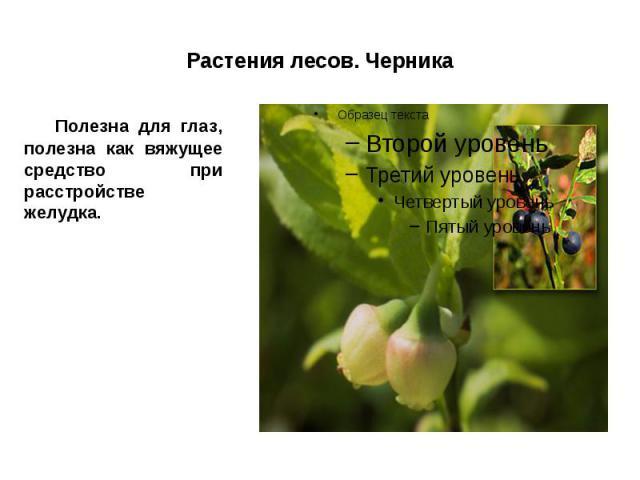 Растения лесов. Черника Полезна для глаз, полезна как вяжущее средство при расстройстве желудка.