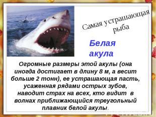 Огромные размеры этой акулы (она иногда достигает в длину 8 м, а весит больше 2