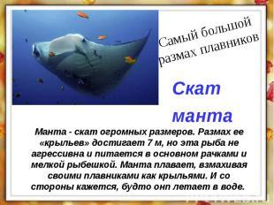 Манта - скат огромных размеров. Размах ее «крыльев» достигает 7 м, но эта рыба н