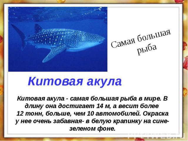 Китовая акула - самая большая рыба в мире. В длину она достигает 14 м, а весит более 12 тонн, больше, чем 10 автомобилей. Окраска у нее очень забавная- в белую крапинку на сине- зеленом фоне.