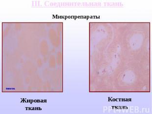 III. Соединительная ткань