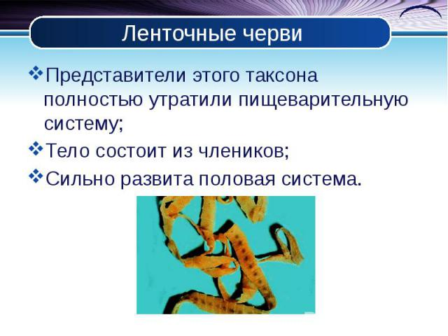 Ленточные черви Представители этого таксона полностью утратили пищеварительную систему; Тело состоит из члеников; Сильно развита половая система.