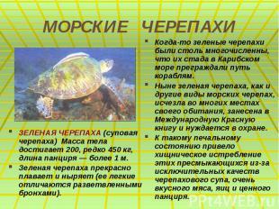 МОРСКИЕ ЧЕРЕПАХИ ЗЕЛЕНАЯ ЧЕРЕПАХА (суповая черепаха) Масса тела достигает 200, р