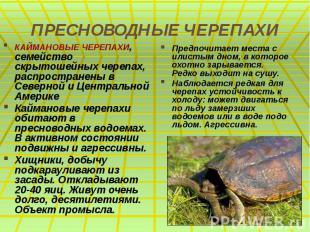 ПРЕСНОВОДНЫЕ ЧЕРЕПАХИ КАЙМАНОВЫЕ ЧЕРЕПАХИ, семейство скрытошейных черепах, распр