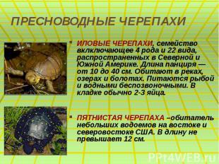 ПРЕСНОВОДНЫЕ ЧЕРЕПАХИ ИЛОВЫЕ ЧЕРЕПАХИ, семейство вклключающее 4 рода и 22 вида,