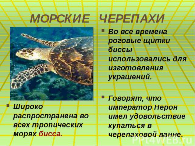 МОРСКИЕ ЧЕРЕПАХИ Широко распространена во всех тропических морях бисса.