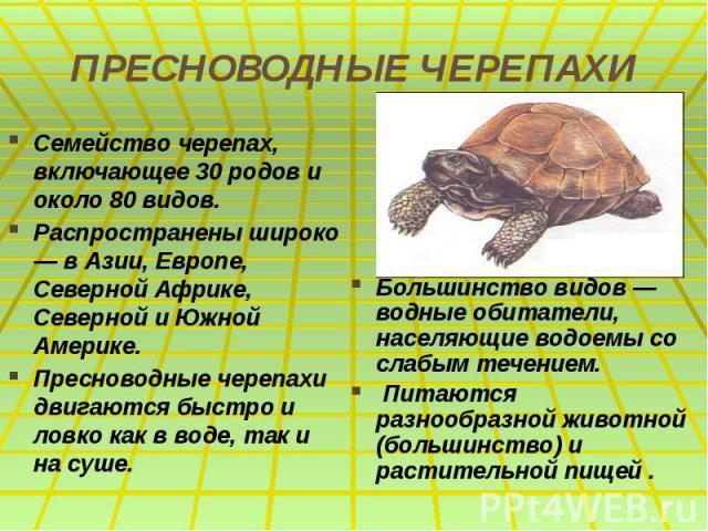 ПРЕСНОВОДНЫЕ ЧЕРЕПАХИ Семейство черепах, включающее 30 родов и около 80 видов. Распространены широко — в Азии, Европе, Северной Африке, Северной и Южной Америке. Пресноводные черепахи двигаются быстро и ловко как в воде, так и на суше.