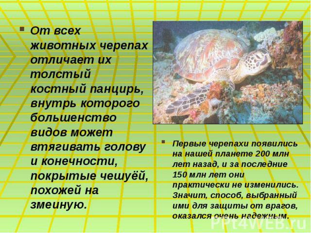 От всех животных черепах отличает их толстый костный панцирь, внутрь которого большенство видов может втягивать голову и конечности, покрытые чешуёй, похожей на змеиную. От всех животных черепах отличает их толстый костный панцирь, внутрь которого б…