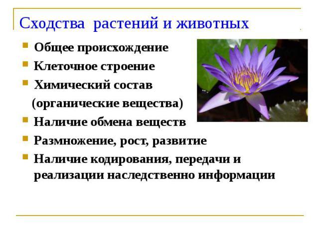 Сходства растений и животных Общее происхождение Клеточное строение Химический состав (органические вещества) Наличие обмена веществ Размножение, рост, развитие Наличие кодирования, передачи и реализации наследственно информации