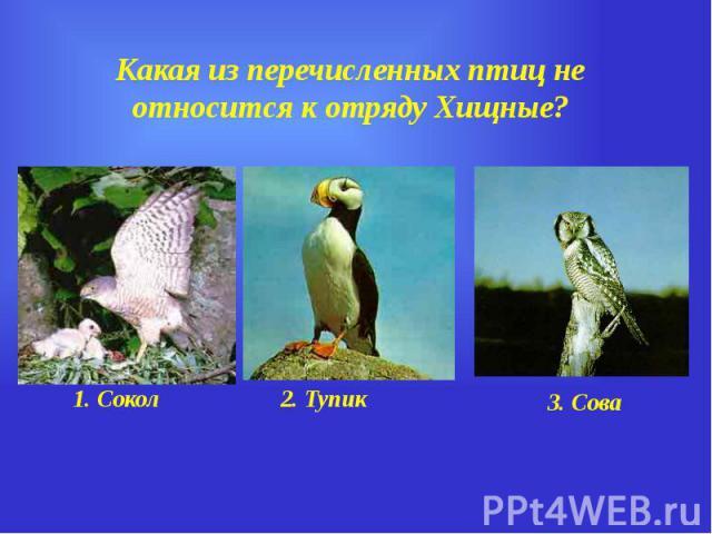 Какая из перечисленных птиц не относится к отряду Хищные?