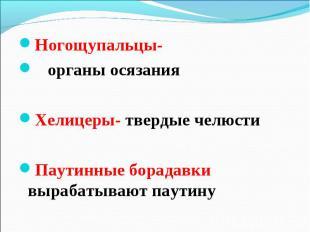 Ногощупальцы- Ногощупальцы- органы осязания Хелицеры- твердые челюсти Паутинные