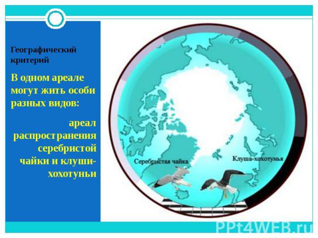 В одном ареале могут жить особи разных видов: В одном ареале могут жить особи разных видов: ареал распространения серебристой чайки и клуши-хохотуньи