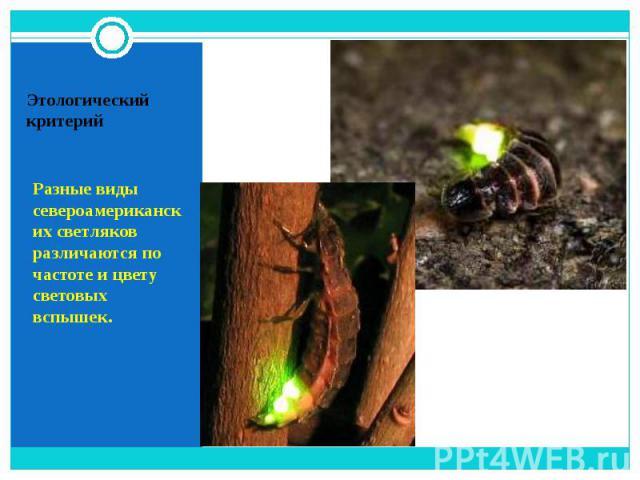 Разные виды североамериканских светляков различаются по частоте и цвету световых вспышек.