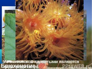 Мягкое тело, которое у многих из них защищено раковиной. Мягкое тело, которое у