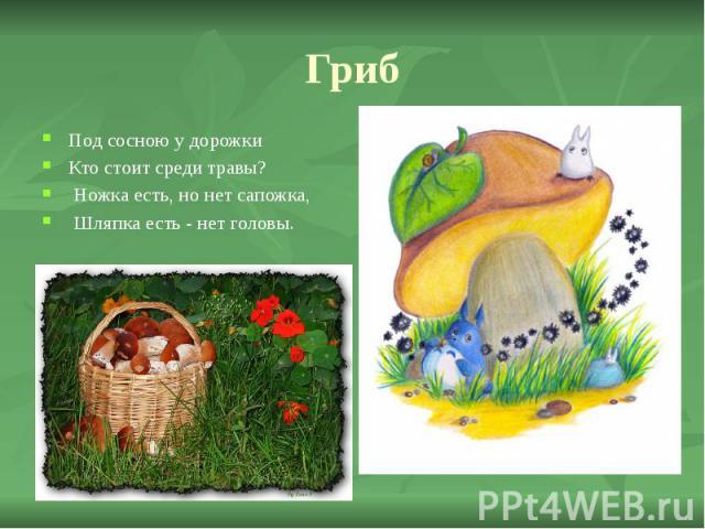 Гриб Под сосною у дорожки Кто стоит среди травы? Ножка есть, но нет сапожка, Шляпка есть - нет головы.