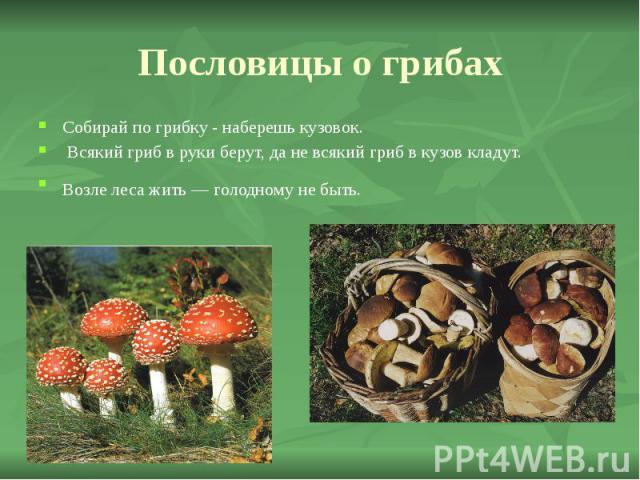 Пословицы о грибах Собирай по грибку - наберешь кузовок. Всякий гриб в руки берут, да не всякий гриб в кузов кладут. Возле леса жить — голодному не быть.