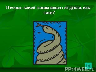 Птенцы, какой птицы шипят из дупла, как змеи? Птенцы, какой птицы шипят из дупла