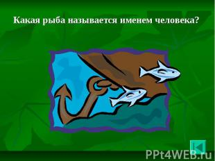 Какая рыба называется именем человека? Какая рыба называется именем человека?