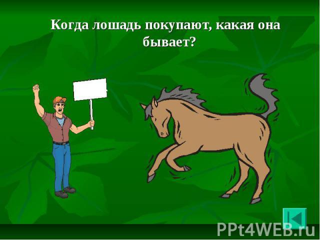 Когда лошадь покупают, какая она бывает? Когда лошадь покупают, какая она бывает?