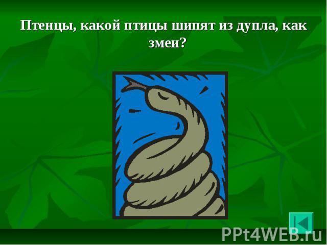 Птенцы, какой птицы шипят из дупла, как змеи? Птенцы, какой птицы шипят из дупла, как змеи?