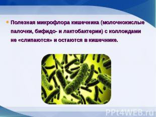Полезная микрофлора кишечника (молочнокислые палочки, бифидо- и лактобактерии) с