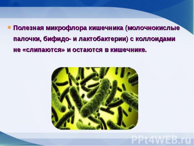 Полезная микрофлора кишечника (молочнокислые палочки, бифидо- и лактобактерии) с коллоидами не «слипаются» и остаются в кишечнике. Полезная микрофлора кишечника (молочнокислые палочки, бифидо- и лактобактерии) с коллоидами не «слипаются» и остаются …