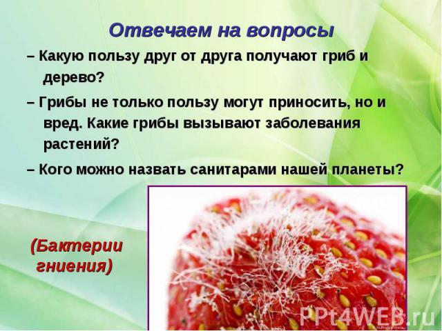 – Какую пользу друг от друга получают гриб и дерево? – Какую пользу друг от друга получают гриб и дерево? – Грибы не только пользу могут приносить, но и вред. Какие грибы вызывают заболевания растений? – Кого можно назвать санитарами нашей планеты?