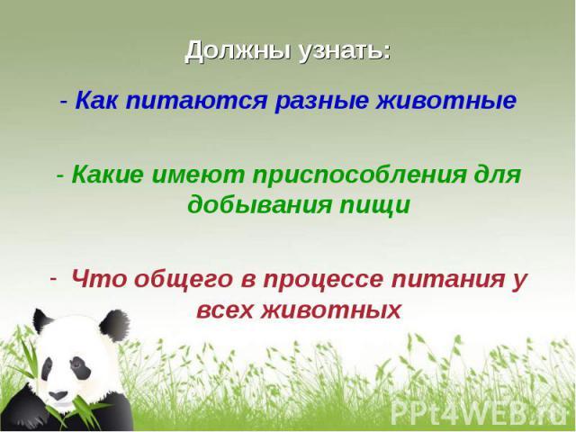 - Как питаются разные животные - Как питаются разные животные - Какие имеют приспособления для добывания пищи Что общего в процессе питания у всех животных