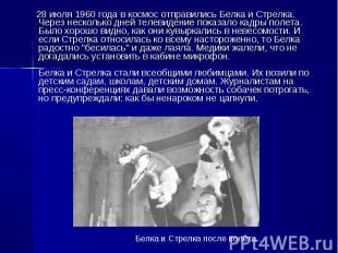 28 июля 1960 года в космос отправились Белка и Стрелка. Через несколько дней тел