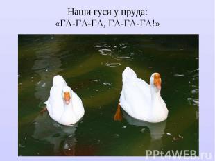 Наши гуси у пруда: «ГА-ГА-ГА, ГА-ГА-ГА!»