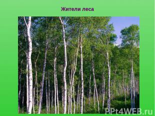 Жители леса