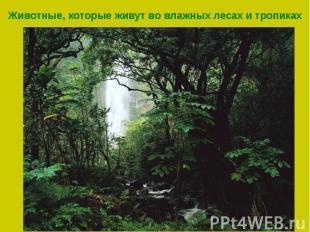Животные, которые живут во влажных лесах и тропиках